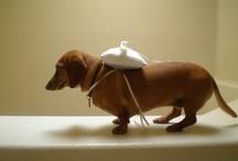 Animals / Bentley Ideas / by Christa (Evans) Strader