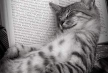 Kisut / cats