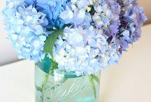 Flowers / by Lynn Lemon