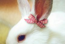 Animals: Rabbits