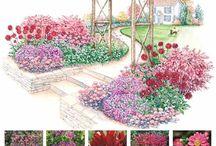 Схемы цветников