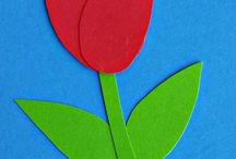 tulipan 1