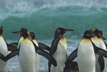 Zona de pingüinos