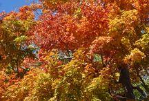 Long Island Fall / Fall (Autumn) on Long Island, NY