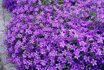 flores cubre suelo
