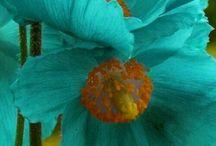 ομορφα και παραξενα λουλουδια