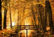 Autumn / by Ginny Gragg
