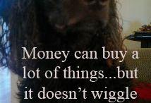 Quotes met honden