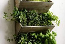 Indoor Garden / Grow herbs, fruits, vegetables, and other fun plants all year long with an indoor garden. Here we pin indoor garden inspiration. / by Earth911 | Recycling Experts