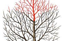 азы обрезки деревьев