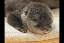 Otters....My Animal Self / by Jeannie Sommers