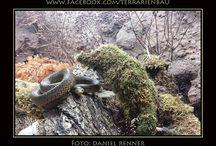 Terrarium Kettennattern / Ein weiteres Kettennatter-Terrarium von Daniel Renner - vielen Dank für die Fotos.  Das Terrarium misst 140 x 80 x 70 cm und wird von gesprenkelten Kettennattern (Lampropeltis holbrooki) bewohnt. Gefällt Euch? Dann speichert es als Anregung...