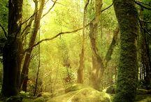 Wood / Wald