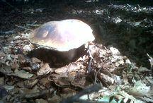 """La cueillettes des champignons / La Ceuillette des champignons à la Salvetat-sur-Agout, racontée par un vacancier des Chalets du Gua des Brasses : """"Les champignons sont méchants"""" http://guadesbrasses.com/les-champignons-sont-mechants/"""