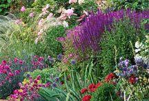 Zahradní