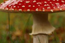 paddenstoel zwammen schimmels