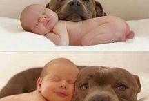Hund og baby
