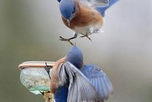 vtáčiky...