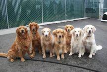 geinige hondje