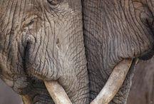 Critters_Elephants