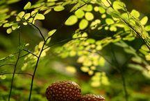 Nature / Landscapes, Views, Plants, Mountains, Flowers