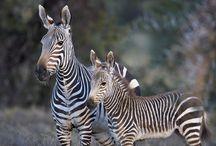 Hermosos Animales