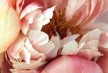 foto - fiori