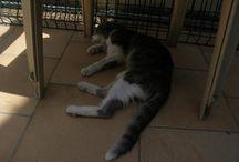 CAT FAMILY / Hommage à notre famille de chats errants