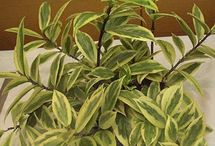 """Really cool plants / Some of our favorite unusual, hard-to-find, """"conversation starters""""."""