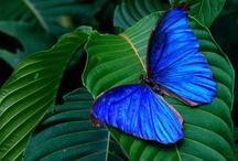 Butterflies  / by Lisa Ken Schroeder