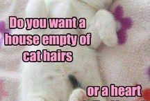 Cats / Like royalty
