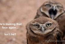 Makes Me Laugh... / by Megan Terry