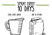Sprays for healthy Plants