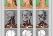 Anatomy - Neck