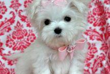Pups / Pups