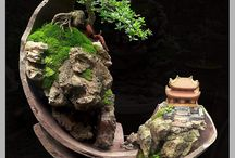 Bonsai sobre pedra