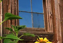 Sunflower De~light / by Katherine Russell
