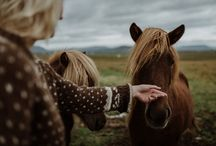 Hekluhestar Iceland mood board