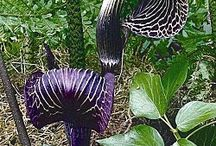Παράξενα λουλούδια