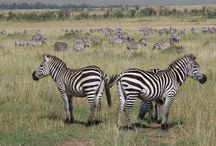 Africa / So many reasons to love Africa. Check out the full Fathom guide to Kenya: bit.ly/1zmqU4U