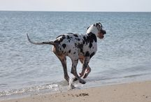 Dogs on beaches etc