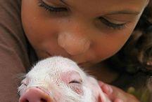Pigs / by J.M. Walker