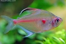 Here Fishy Fishy / by Brandi Parga