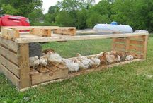 Chicken Coops and Tractors