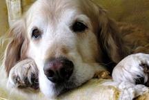 Sergeant's initiative to emBARK on Pet Health