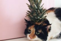Cats and other cute animals