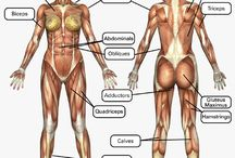 Know Your Body / Know your muscle groups.