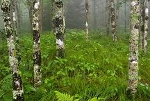 Metsän valtakunta/ Forest