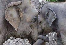 love éléphant