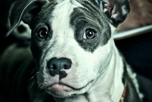 Dogs / by Sara Rosenberg Gilgore